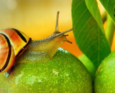 The fruit of the Spirit_ patience